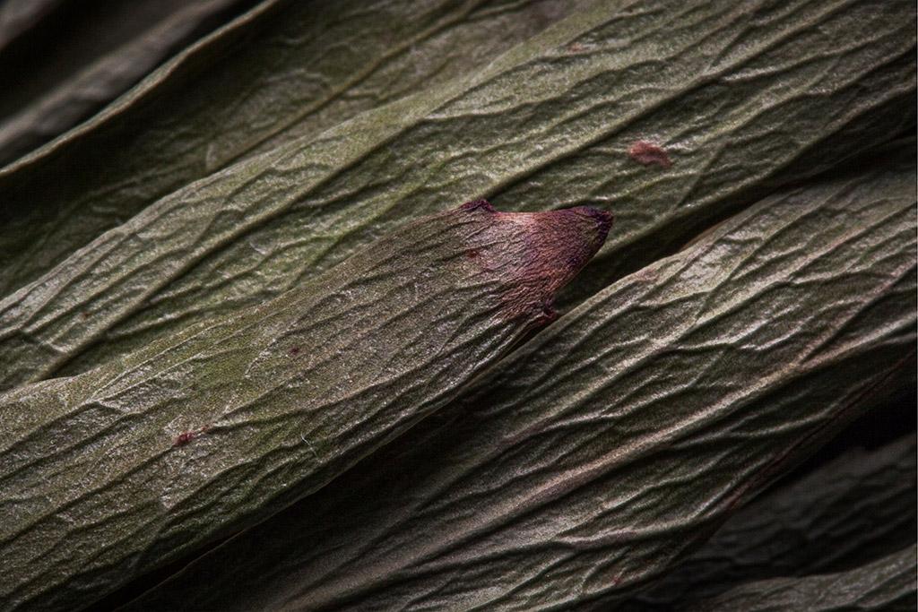 순수-서지수-The-Leaf-#1-(2).jpg